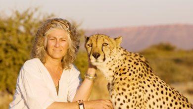 Photo of L'appello di Laurie Marker: stop al traffico di ghepardi in Somalia!