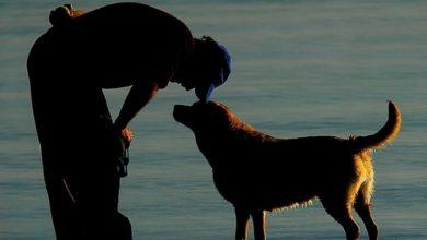 Photo of Ogni animale, come ogni persona, deve essere educata alla convivenza