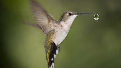 Photo of La spesa del colibrì