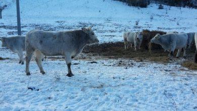 Photo of Animali ancora senza stalle! Gli allevatori lanciano l'allarme a tre anni dal terremoto in Centro Italia