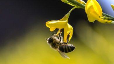 Photo of Il ruolo insostituibile degli insetti nell'ecosistema
