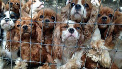 Photo of Dal Parlamento europeo una risoluzione contro il traffico illecito di animali
