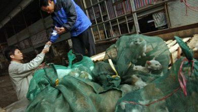 Photo of Coronavirus e benessere degli animali in Cina