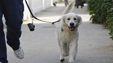 Photo of Le 9 doti naturali del cane