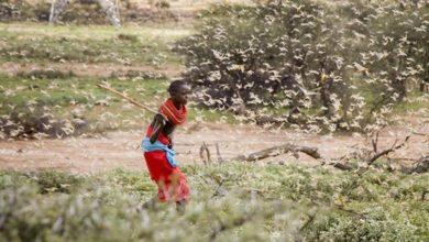 Photo of Il Corno d'Africa devastato da sciami di sciami di cavallette e locuste