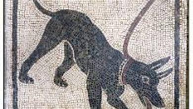Photo of Nuovi scavi archeologici confermano il ruolo dei cani come animali da compagnia già nell'antichità