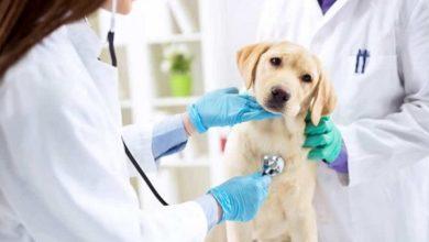 Photo of Veterinario, una professione scelta per amore degli animali