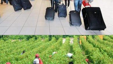 Photo of Import export: il saldo finale