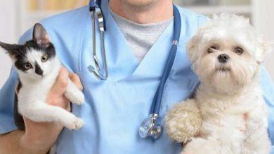 Photo of Salute animale: nuova raccomandazione dell'OIE ai governi: rafforzate i vostri sistemi veterinari