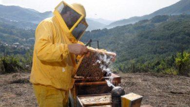 Photo of Mortalità delle api, EFSA: stato dell'arte per nuove linee guida